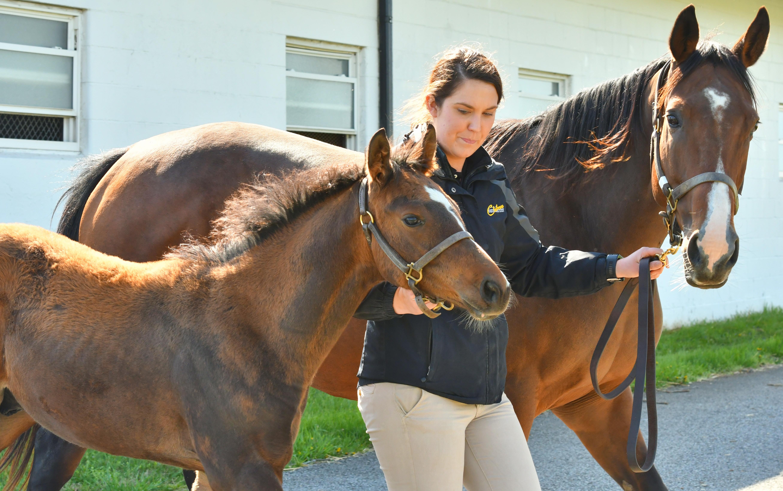 Sabbatical Foal Patrol National Museum Of Racing And