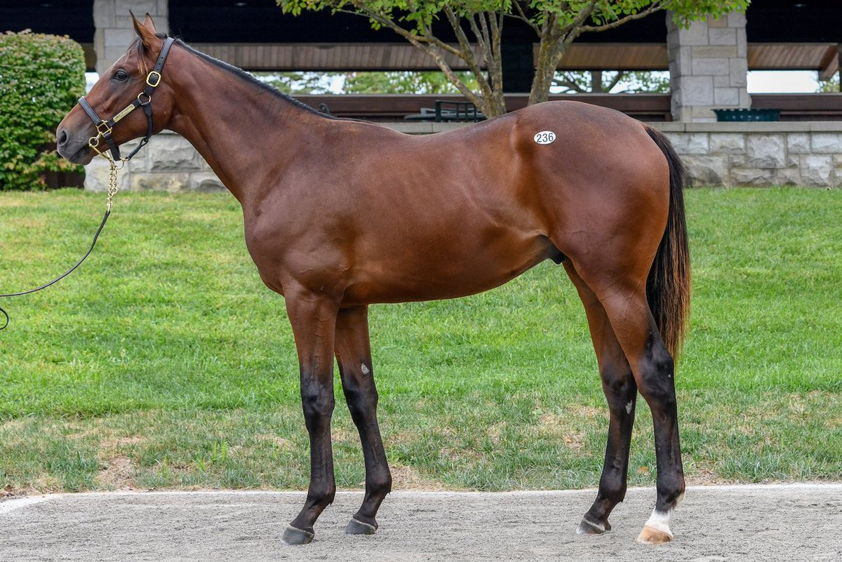 Arravale Foal Patrol National Museum Of Racing And