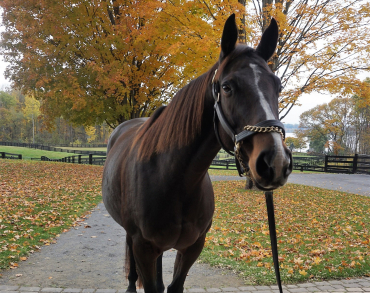 Home | Foal Patrol - National Museum of Racing and Hall of Fame
