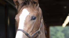 La Verdad Foal Patrol National Museum Of Racing And
